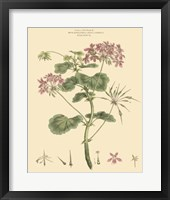 Blushing Pink Florals IV Fine-Art Print