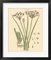Blushing Pink Florals VIII Fine-Art Print