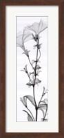 Tall Petunia (small) Fine-Art Print