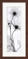 Tall Dahlia (small) Fine-Art Print