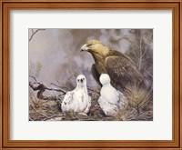 Golden Eagle Nesting Fine-Art Print