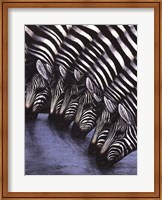 Zebra's Watering Hole Fine-Art Print