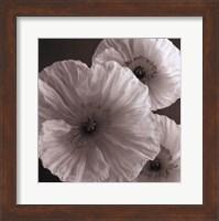 Poppy Study IV Fine-Art Print