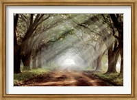 Evergreen Plantation A Fine-Art Print