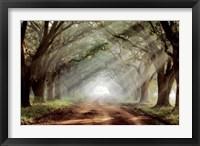 Evergreen Plantation A Fine-Art Print