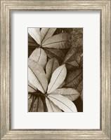 Garden Textures I Fine-Art Print