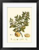 Small Miller's Bounty I (P) Fine-Art Print