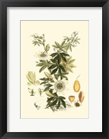 Small Miller's Bounty IV (P) Fine-Art Print