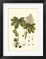 Small Miller's Bounty V (P) Fine-Art Print