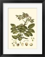 Small Miller's Bounty VI (P) Fine-Art Print