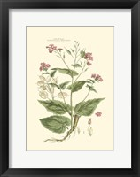 Small Blushing Pink Florals VII (P) Fine-Art Print