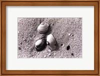 Sand Treasures V Fine-Art Print