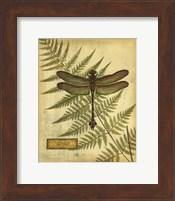 Royal Dragonflies III Fine-Art Print