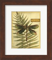 Royal Dragonflies IV Fine-Art Print