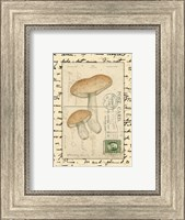 Mushrooms II Fine-Art Print