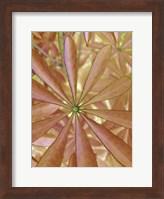 Woodland Plants in Red II Fine-Art Print