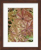 Woodland Plants in Red IV Fine-Art Print
