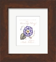 September's Flower, Morning Glory Fine-Art Print