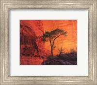 Lone Pine Fine-Art Print