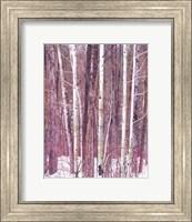 Aspen Grove Fine-Art Print
