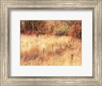 Autumn Pasture Fine-Art Print