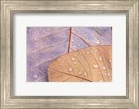 Waterdrops on Magnolia Journal Fine-Art Print