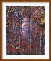 Glowing Autumn Forest, Virginia Fine-Art Print