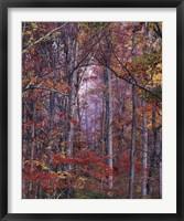 Glowing Autumn Forest, Virginia Fine-Art Print