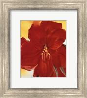 Red Amaryllis, 1937 Fine-Art Print