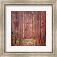 Tannenwald I Fine-Art Print