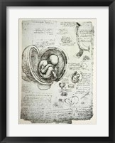 The Human Fetus in the Womb Fine-Art Print