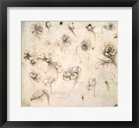 Study of the Flowers of Grass-like Plants Fine-Art Print