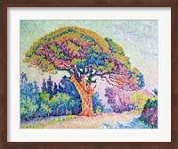 The Pine Tree at St. Tropez, 1909 Fine-Art Print