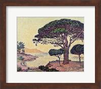 Umbrella Pines at Caroubiers, 1898 Fine-Art Print