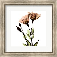Crystal Flowers X-Ray, Gentian Fine-Art Print