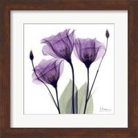 X-ray Royal Purple Gentian Fine-Art Print