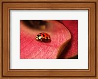 Ladybug On Leaves Fine-Art Print