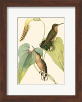 Delicate Hummingbird II Fine-Art Print