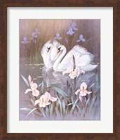 Swans With Waterlilies Fine-Art Print