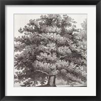 Silver Majesty I Fine-Art Print