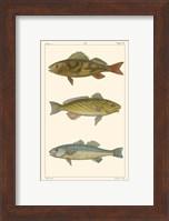Freshwater Fish I Fine-Art Print