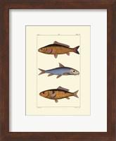 Freshwater Fish II Fine-Art Print