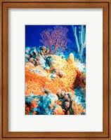 Elephant-ear-sponge and sea fan Fine-Art Print