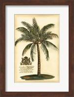British Colonial Palm III Fine-Art Print