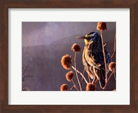 Meadowlark Fine-Art Print