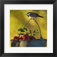Apples & Chickadee Fine-Art Print