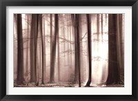The Cloaking Woods Fine-Art Print