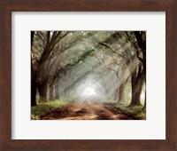 Evergreen Plantation B Fine-Art Print