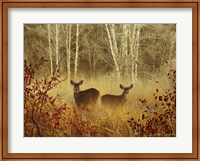 Foggy Deer Fine-Art Print