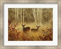 Foggy Deer Fine-Art Print